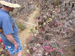 Cousin Dave admires flowers at San Miguel Island