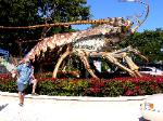 John catches a very large lobster in the Keys
